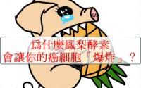 鳳梨酵素製作方法